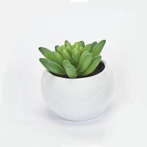 desktopsucculentplantinceramicpot28setof229